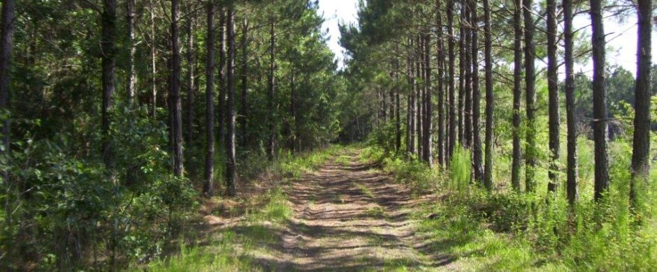 south georgia timber land for sale